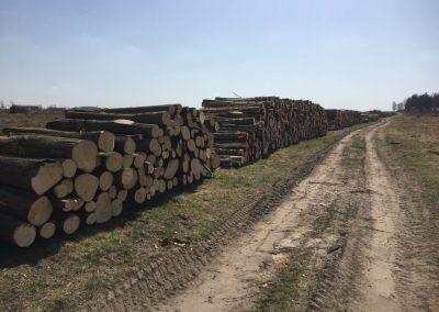 10 1 1 400x284 - Pozyskiwanie Drewna