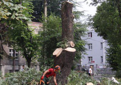 101 400x284 - Wycinka i Pielęgnacja Drzew na Terenach Miejskich