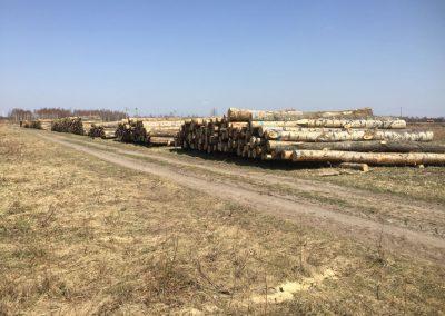 11 1 400x284 - Pozyskiwanie Drewna