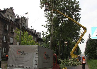 113 400x284 - Wycinka i Pielęgnacja Drzew na Terenach Miejskich