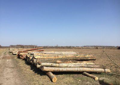 13 1 400x284 - Pozyskiwanie Drewna
