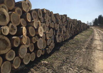 16 1 400x284 - Pozyskiwanie Drewna