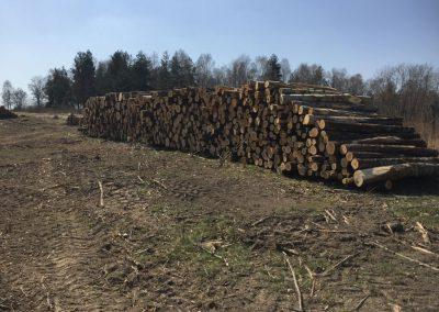 18 1 400x284 - Pozyskiwanie Drewna