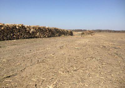 20 1 400x284 - Pozyskiwanie Drewna