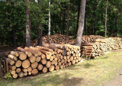 23 1 400x284 - Pozyskiwanie Drewna