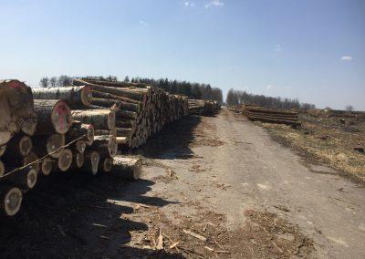 25 1 400x284 - Pozyskiwanie Drewna