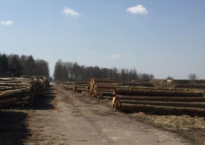29 1 400x284 - Pozyskiwanie Drewna