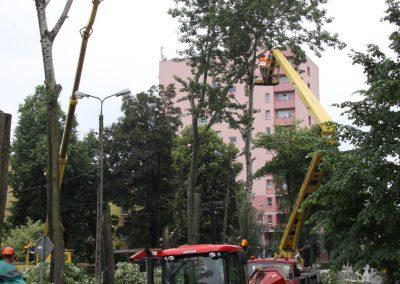 36 1 400x284 - Wycinka i Pielęgnacja Drzew na Terenach Miejskich