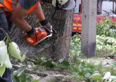37 400x284 - Wycinka i Pielęgnacja Drzew na Terenach Miejskich