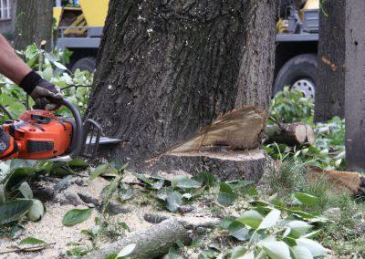 38 1 400x284 - Wycinka i Pielęgnacja Drzew na Terenach Miejskich