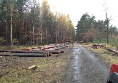 43 400x284 - Pozyskiwanie Drewna