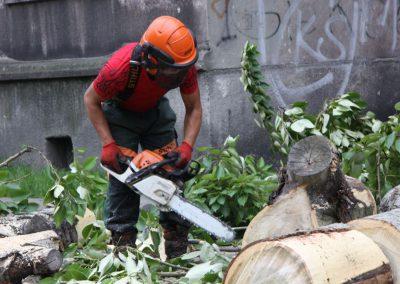 45 400x284 - Wycinka i Pielęgnacja Drzew na Terenach Miejskich