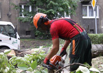46 1 400x284 - Wycinka i Pielęgnacja Drzew na Terenach Miejskich