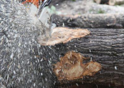 47 400x284 - Wycinka i Pielęgnacja Drzew na Terenach Miejskich