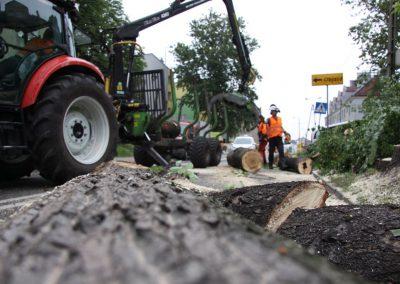 50 400x284 - Wycinka i Pielęgnacja Drzew na Terenach Miejskich