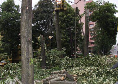 521 400x284 - Wycinka i Pielęgnacja Drzew na Terenach Miejskich