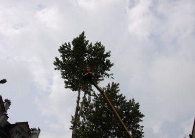 54 400x284 - Wycinka i Pielęgnacja Drzew na Terenach Miejskich