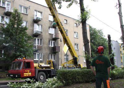 74 400x284 - Wycinka i Pielęgnacja Drzew na Terenach Miejskich