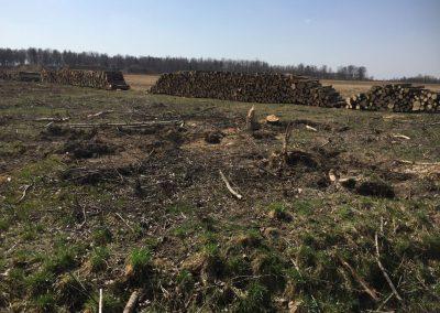 8 1 1 400x284 - Pozyskiwanie Drewna