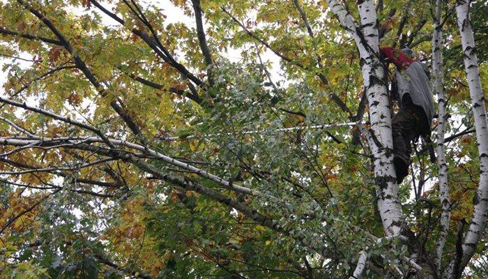 pielegnacja drzew - Pielęgnacja Drzew