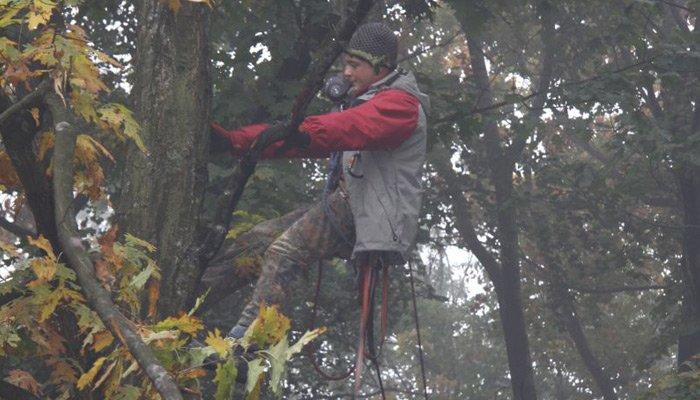 pielegnacjadrzew - Pielęgnacja Drzew