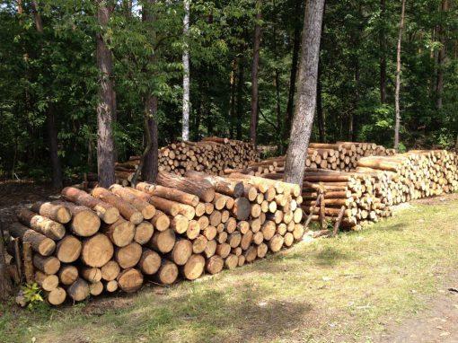 Pozyskiwanie Drewna