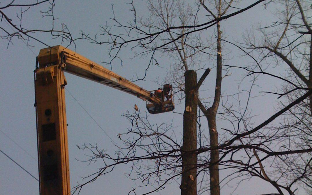 Wycinka i Pielęgnacja Drzew na Terenach Miejskich